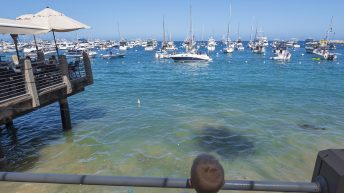 Catalina Island, Chanel Islands National Park, California, Pier. Boats in Water. Child looking.