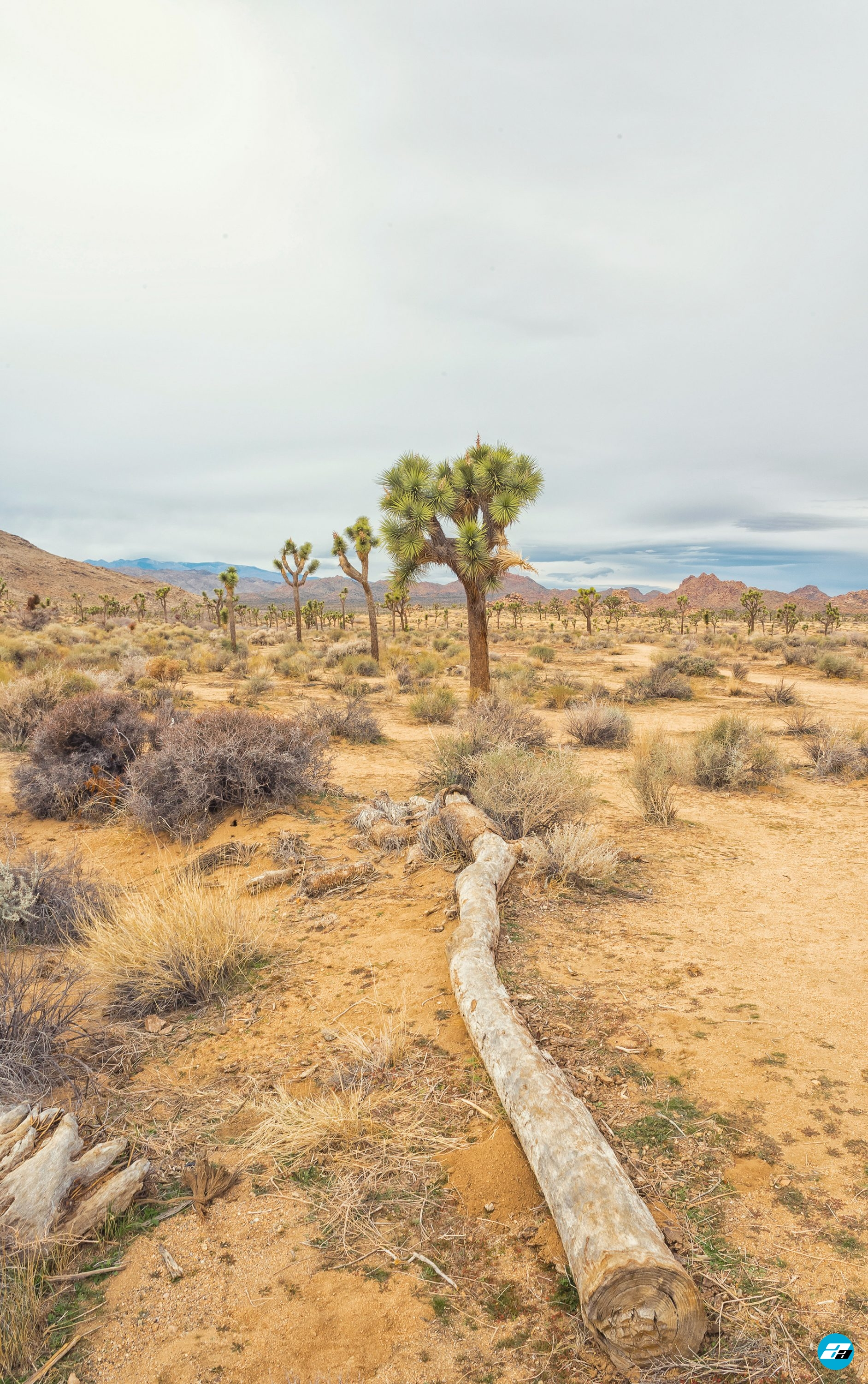 Joshua Tree National Park, California, USA. California Attraction & Travel.