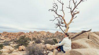 Joshua Tree National Park, California, USA. California Attraction & Travel.