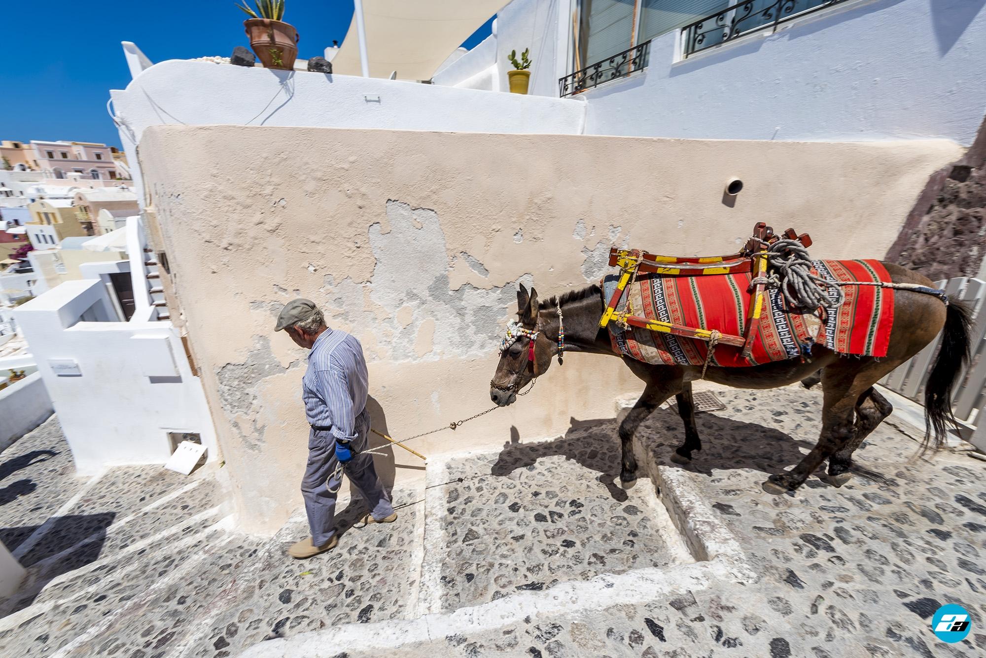 Oia, Santorini Greece. Mules. Santorni transportation.