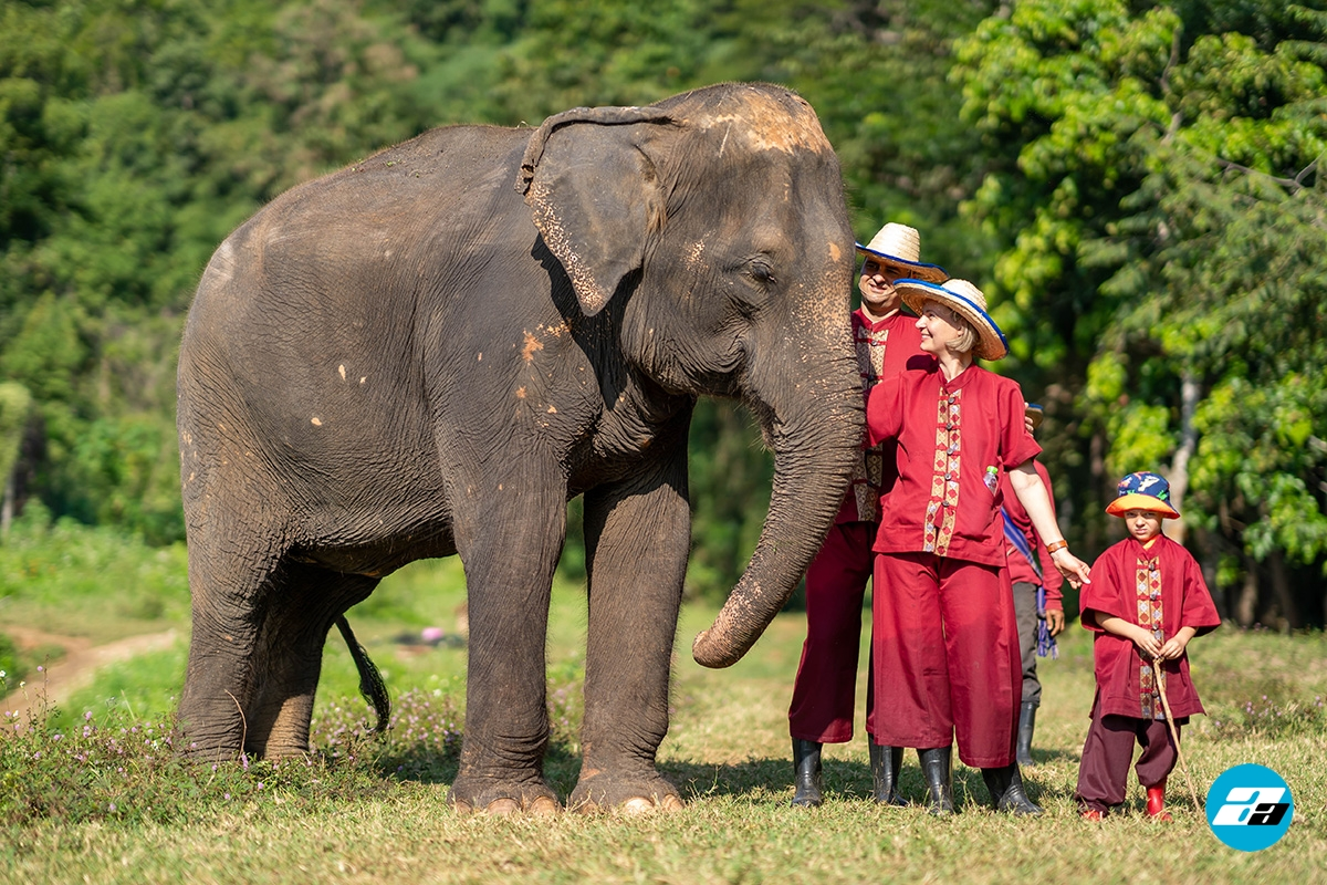 Thailand. Elephant sanctuary