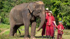 Thailand, Elephant Rescue Park