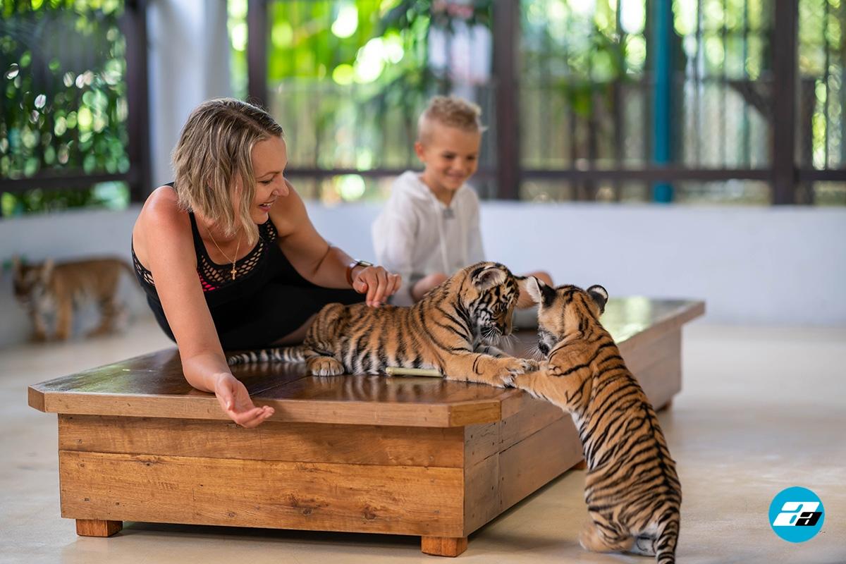 Tiger Park, Thailand